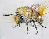 Gentle Bumblebee