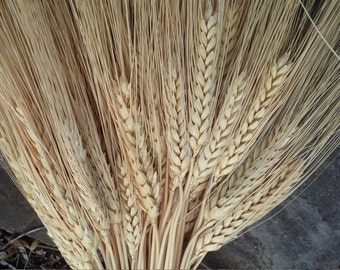 Dried Golden Wheat, Bearded Wheat, 8 oz. Bunches, DIY Wedding, Rustic, Country, Autumn Harvest