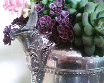 Artificial  Succulent Plants Nestled Inside a Vintage Coffee Pot