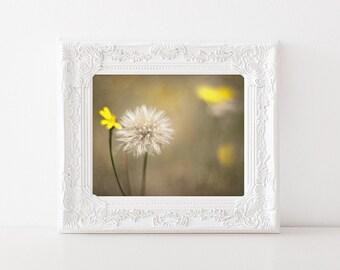 Dandelion Art - Fine Art Photography - Nature Photo Print - 5x7 Flower Art - Yellow Flowers - Girls Room Decor - Nursery Decor - Make a Wish
