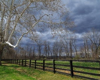 The beauty of the Sycamore tree, Hudson Valley