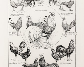 Vintage Poultry Print, Black and White Print by Ludlow: Hamburghs & Redcaps