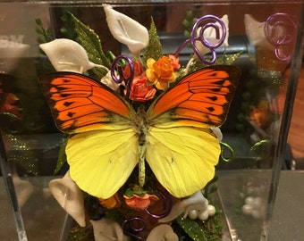 Yellow orange Real Dry Butterfly