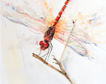 Red dragonfly - Original Watercolor - Camargue -  rural - Insect - invertebrate - Animal Art - Nature - Unique Gift - Birthday