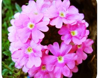 Flower Coaster 7
