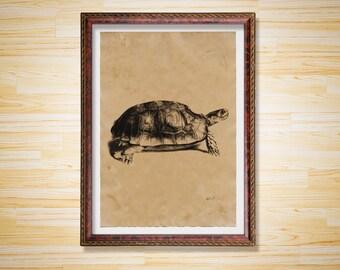 Wildlife decor Tortoise print Animal poster