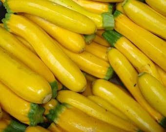 Zucchini Seeds Summer Squash 100 Golden Zucchini 60 days