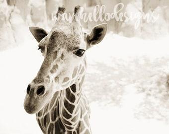 Fine Art Print - Giraffe - Home Decor