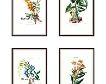 Set of four Flore D'Amerique Floral prints from the 1800's