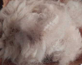 Raw Alpaca Fleece, Gorgeous Soft Prime Blanket Fiber, Natural White, Spins like a dream, Felt Spin Craft Create, Unwashed 6 ounces