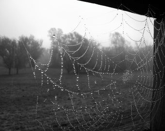 8X10 Fine Art Photography Print - Spider Web in the Dew