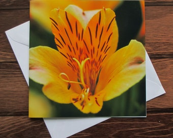 Flower Greetings card 14cm square