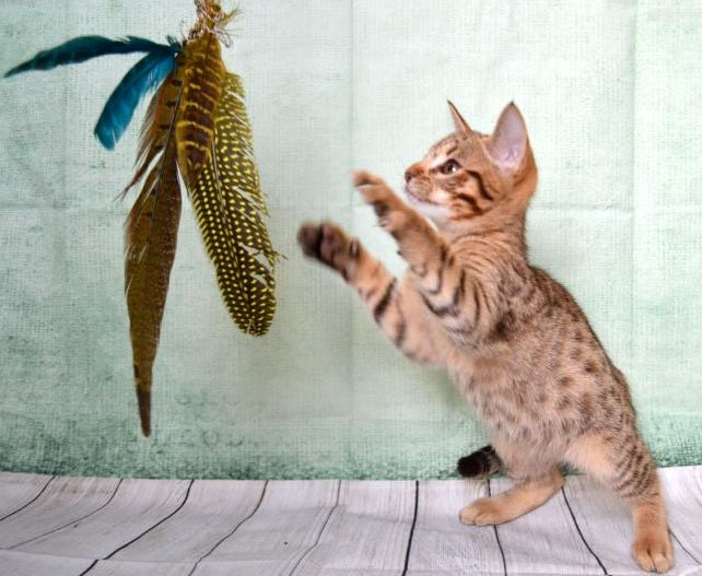 Cat teaser cat toy cat feather toy cat wand kitty toy for Diy cat teaser wand