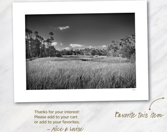 Signed 12x18 Black & White Fine Art Photo. Crystal River, Florida. Matted to 18x24