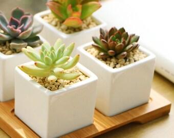 Ceramic Succulent Planters with Wooden based, Modern Succulent Planter, Birthday gift, Gardener Gift, Wedding Gift,  Home Decor