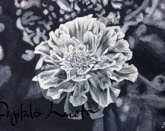 """Marigold II notecards (black and white) (A7 size/5""""x7"""") set of 10"""
