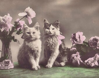 Vintage photo kittens cat art print poster colorized antique photograph 1920s cat lover gift girls room decor colourized