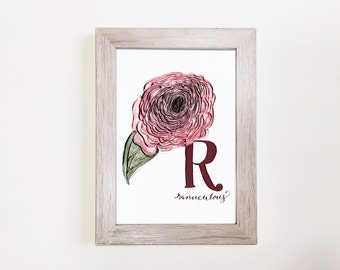 "R is for Ranunculus - Botanical Alphabet Print 5""x7"""