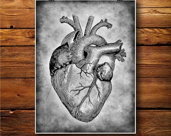 Heart Print, Anatomy Poster, Human Organ Illustration  BW292