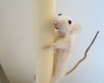 Crystal Candlestick Mouse - Taxidermy, White Mouse on Ornate Glass Candle & Candlestick Holder