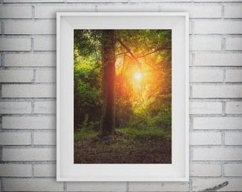 Forest Photography, Forest Print, Tree Art, Fall Decor, Nature Print, Woodland Art Print, Forest Wall Art, Printable Art, Digital Download