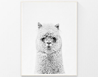 Alpaca art, Nursery Decor, printable wall art, Nursery art, animal prints for nursery, Nursery prints, nursery printable, wall art printable