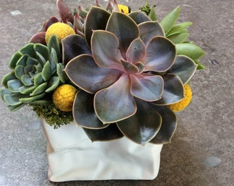 Succulents and Billy Balls in Paper Bag Vase