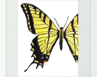 Esatern Tiger Swallowtail Butterfly Watercolor Fine Art Print