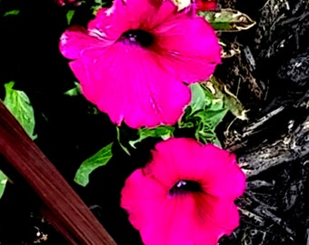 Fine Art Photography/Pink Floral Art Print/Bedroom Picture/Flower/Fine Art Photography Print/Nature Print/Modern Art/Floral Wall Art Print