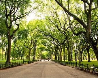 The Mall - Central Park - New York City - NYC - Manhattan Island - USA - Photo - Print