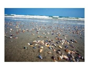Beach Wall Art Coquina Clam Shells Bear Island NC photograph 8x10 16x20 Landscape Photography Ocean Decor
