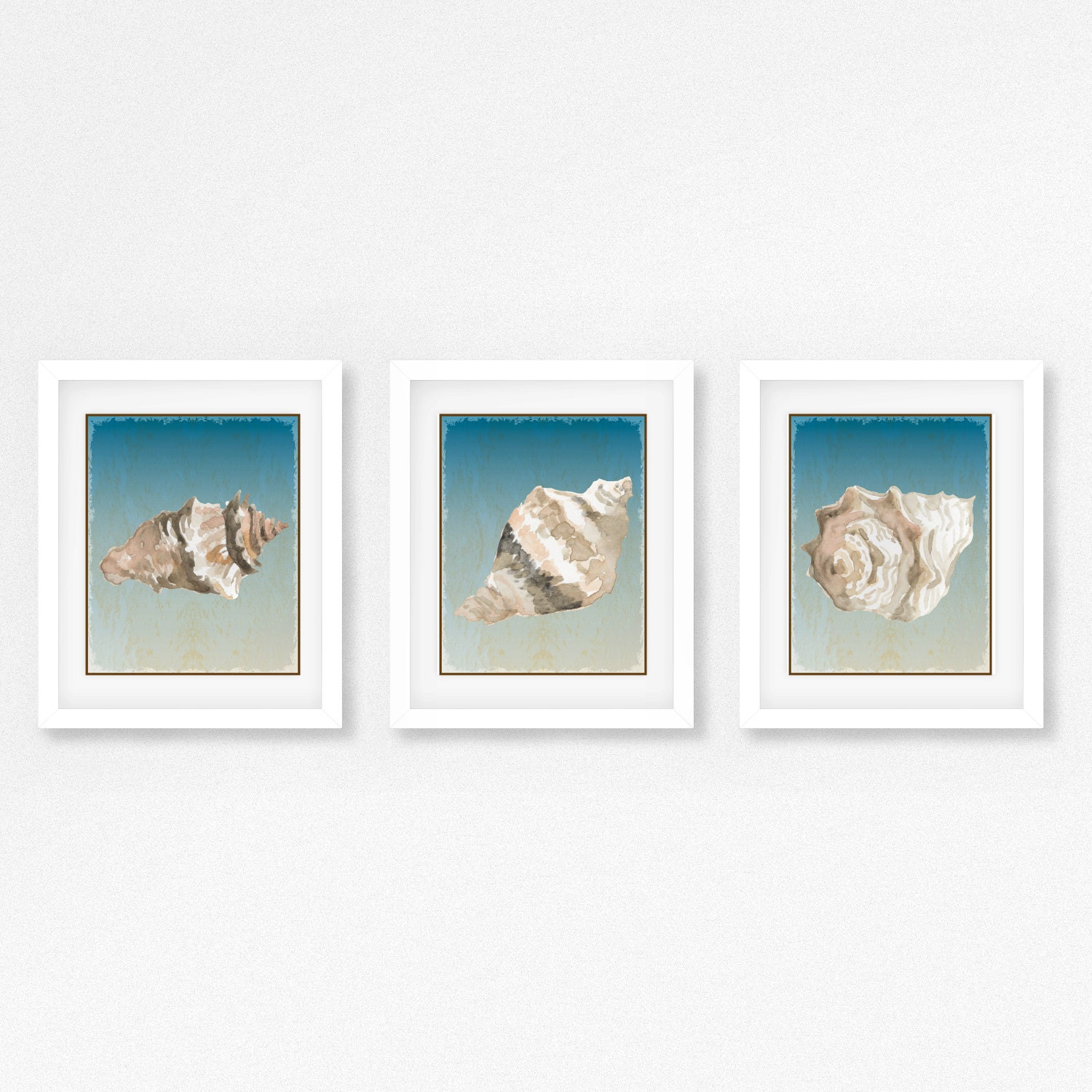 3 framed and matted seashell prints free shipping for 3 by 3 prints