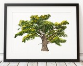 Oak tree poster Watercolor print Tree print Nature decor ACW899