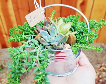 Tin bucket filled with succulents