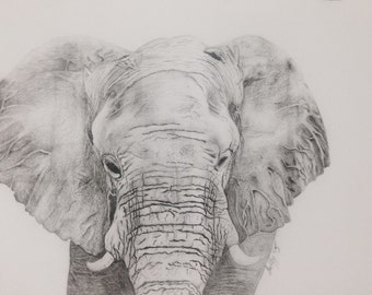 Graphite Elephant Print A3