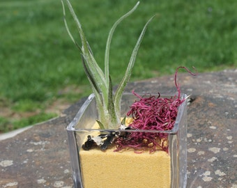 Square Glass Terrarium with Yellow Sand