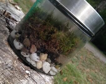 Glass Jar Moss Terrarium