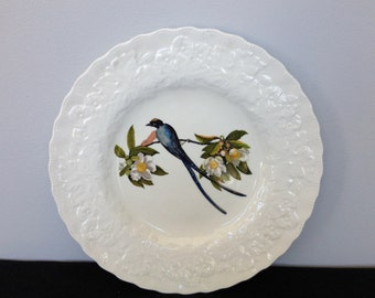 National Audubon Society Birds of America plate #168 by Alfred Meckin