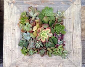 """10""""x10"""" Living Wall Succulent Planter Vertical Hanging Garden Art Rustic Wood Arrangement  Flower Bouquet Gift"""