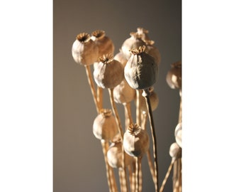 Dried Poppy Seeds Photo - Seeds Photo - Sepia - Vertical Photo - Digital Photo - Digital Download - Instant Download - Fine Art Photography
