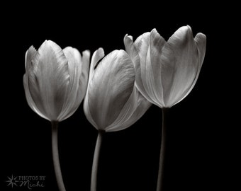Tulips in Black and White, Photo, Flowers, Still Life, Wall Art, Fine Art, Home Decor, Office Decor