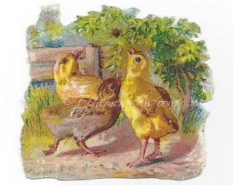 8 Chicks and Ducklings: Victorian Die cut Scrap