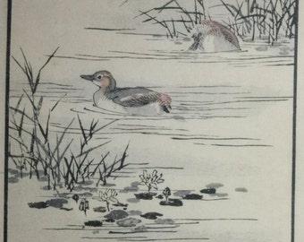 Grebe, Dabchick ' Kaitsuburi ' : An original, signed 1880s Japanese Woodblock Print By KONO BAIREI