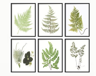 Fern Wall Print - Vintage Fern Prints - Botanical Print Set of 6 - Home Decor - Wall Hanging - Wall Art - Fern Wall Art - Leaf Print Art