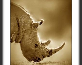 Sepia Photography-Commercial Use African Wildlife Sepia Photograph of a White Rhino Grazing for Digital Download
