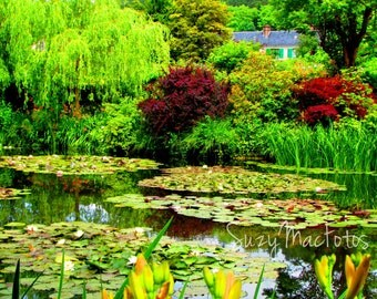 Claude Monet's Lily Pond