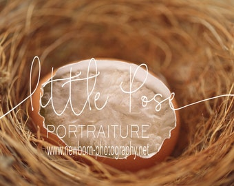 Little Pose ~ Egg Nest Newborn Digital Background High Res jpg file