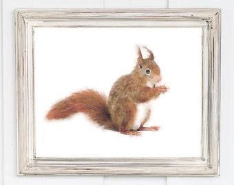 Squirrel nursery wall art, squirrel print, watercolor, baby animal print 8x10