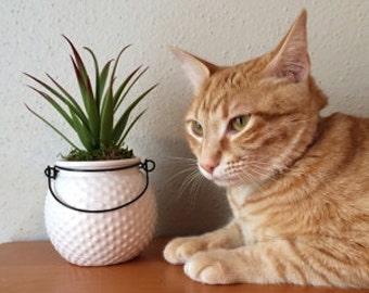 Succulents in Textured Ceramic Pots