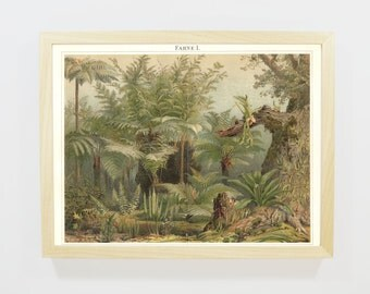 wall chart, antiquarian, antique lithography, color printing, lithographic print, art print jungle, Illustration fern